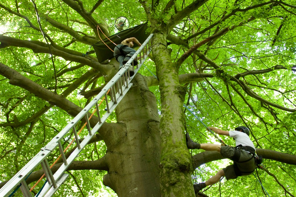 Two men climb up a tree