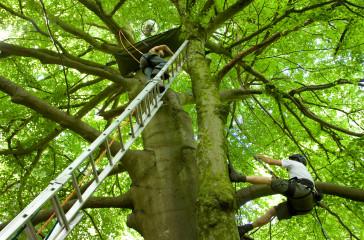 Two men climb up a tree